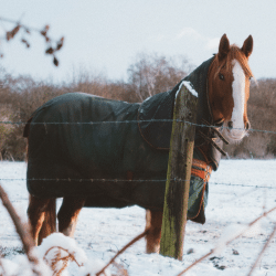 equine blankets and coverings