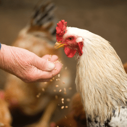 All Poultry Supply Products