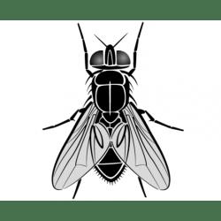Fly & Bug Protectors