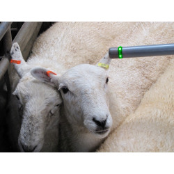 sheep tag readers