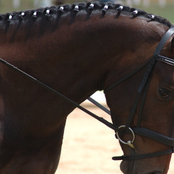 english_bridles_and halters