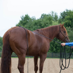 horse_training_equipment_and supplies